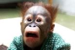 Monkey featured image