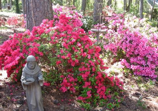 Francis's Garden