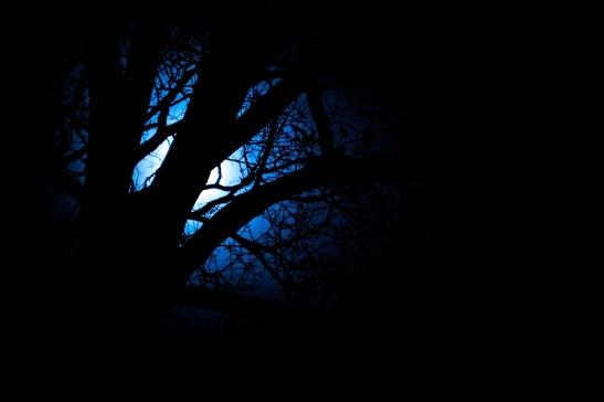 Blue Moon, Interrupted
