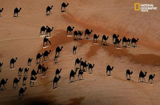 national-geographic-steinmetz-camel-shadows