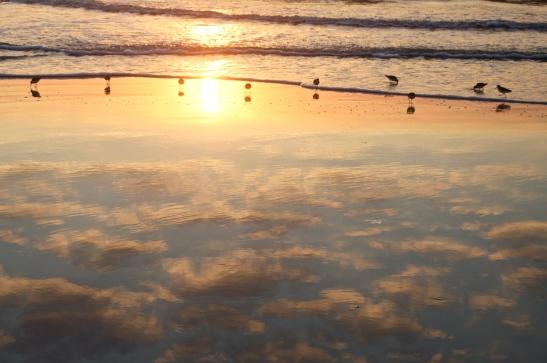Cumberland bird reflections