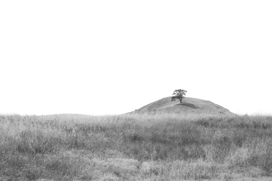 One Tree Hill B&W